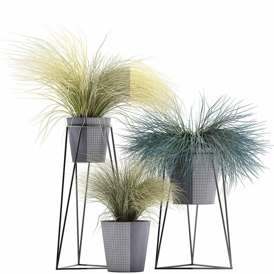 장식용 잔디 식물 royalty-free 3d model - Preview no. 8