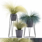 ornamental grass plants Tussock 3d model