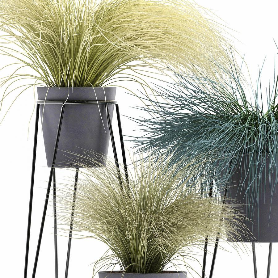 장식용 잔디 식물 royalty-free 3d model - Preview no. 4