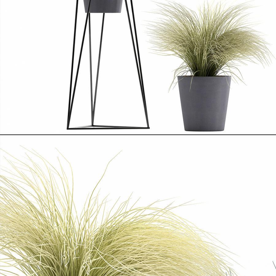 장식용 잔디 식물 royalty-free 3d model - Preview no. 12