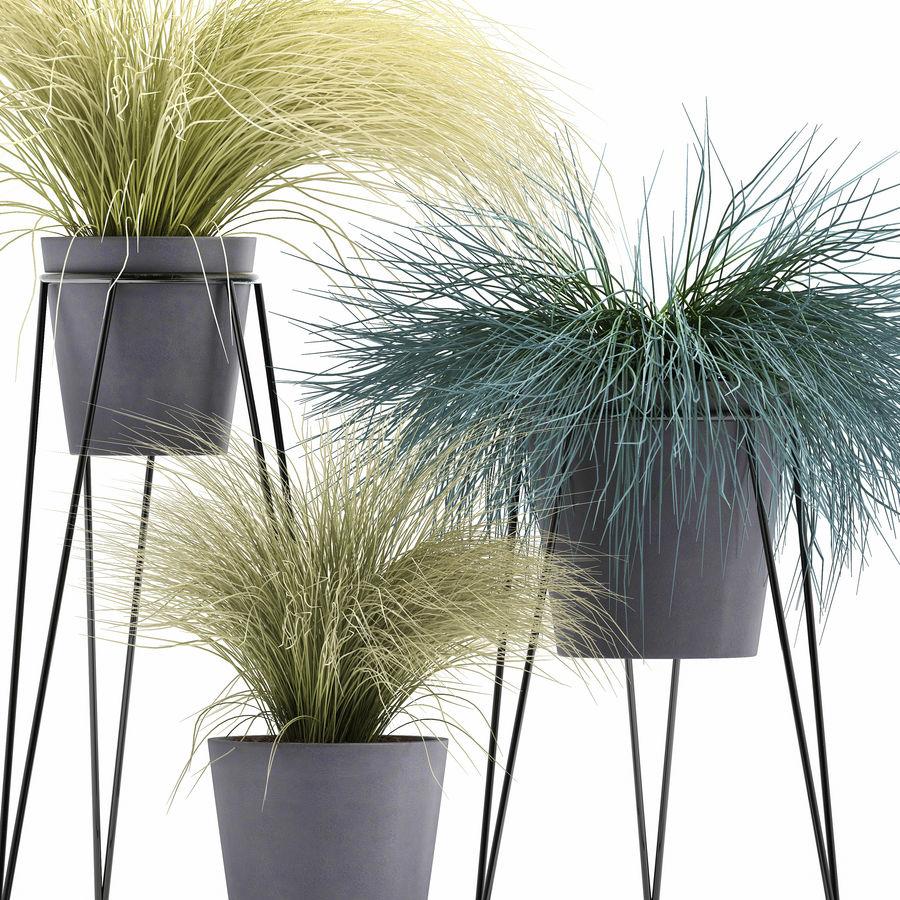 장식용 잔디 식물 royalty-free 3d model - Preview no. 3