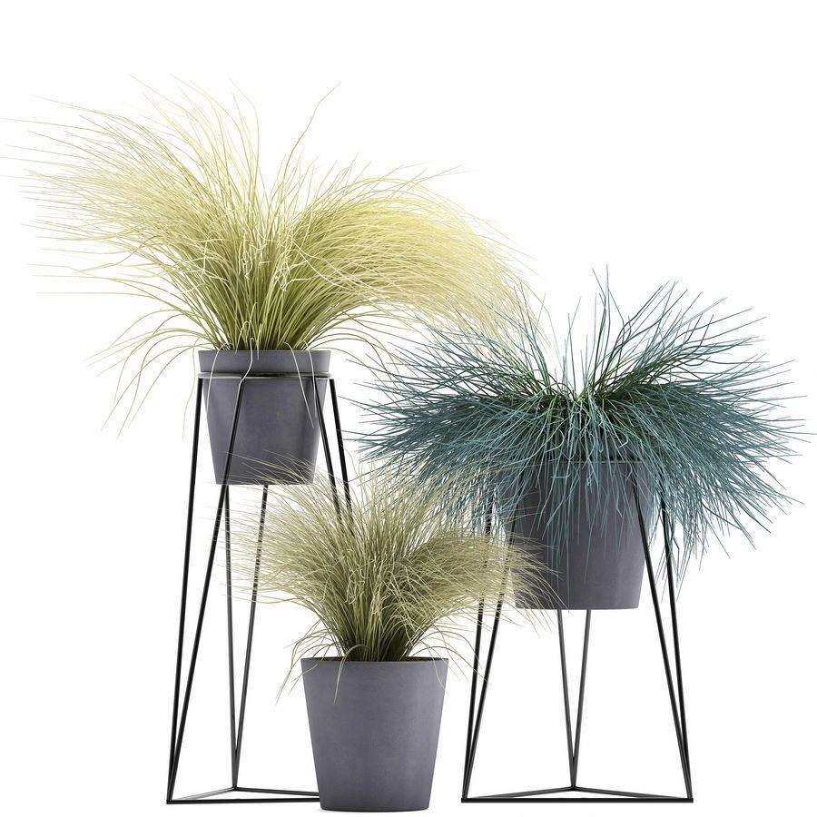 장식용 잔디 식물 royalty-free 3d model - Preview no. 2