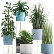 Collezione di piante ornamentali 3d model