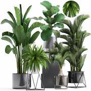 Collection de plantes exotiques 3d model