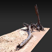 Пустынное дерево лежа 01 3D Scan 3d model