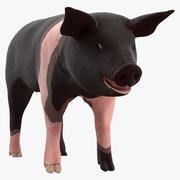 Hampshire Pig Piglet Rigged for Maya 3d model