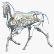 Horse Envelope with Skeleton Rigged for Maya 3D Model 3d model