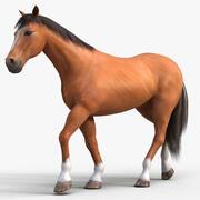 Horse PRO (brun) 3d model