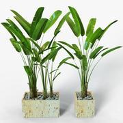 Bananväxt 3d model