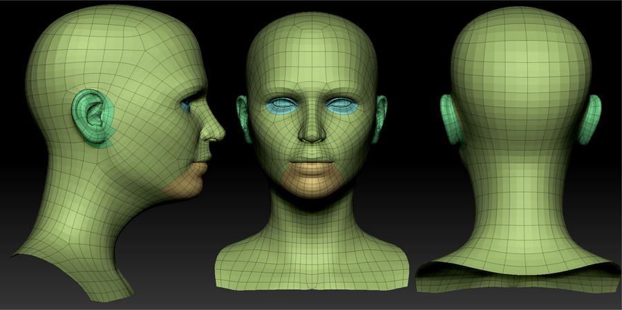 Realistic Female Head 3D Model royalty-free 3d model - Preview no. 8