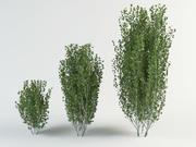 birch tree betula bush 3d model