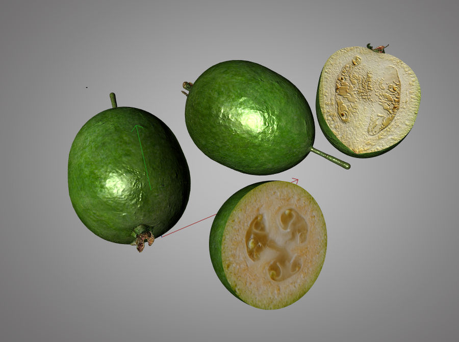Feijoa royalty-free 3d model - Preview no. 8