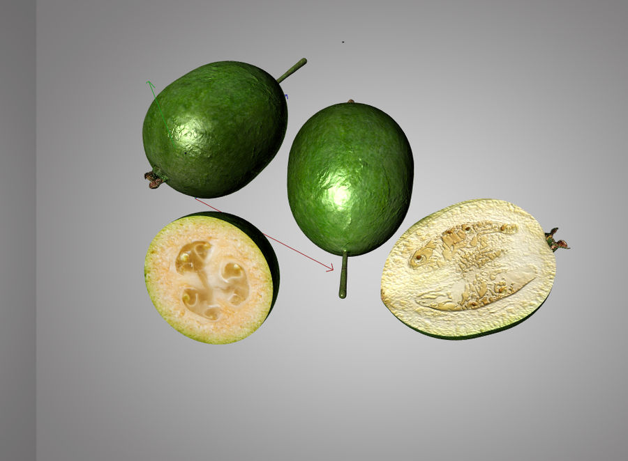 Feijoa royalty-free 3d model - Preview no. 7