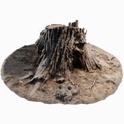 삼나무 그루터기 002 3d model