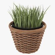 Pflanze im Topf 3d model