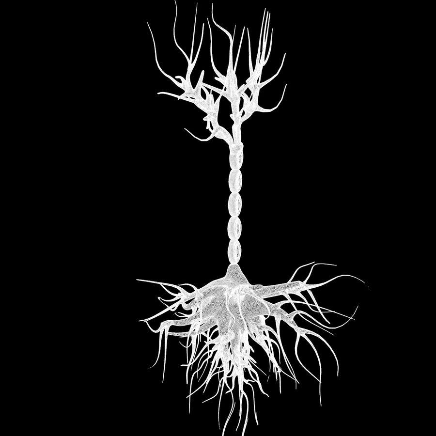 Neuron Human anatomy royalty-free 3d model - Preview no. 6