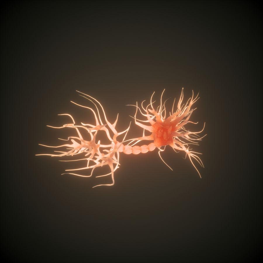 Neuron Human anatomy royalty-free 3d model - Preview no. 3