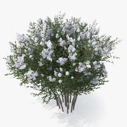 Crepe Myrtle Tree 3d model