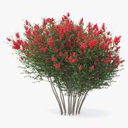 Röd Crepe Myrtle Tree 3D-modell 3d model