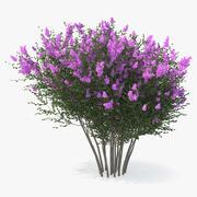 Tuscarora rouwband mirte boom 3d model