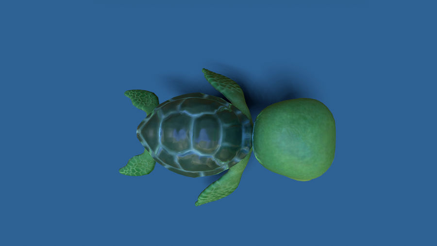 cartoon sea turtle royalty-free 3d model - Preview no. 5