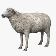 Sheep_White 3d model