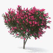 Groenblijvende kleine boom mirte 3d model