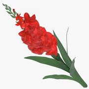 Tipo de flor - Vermelho 3d model