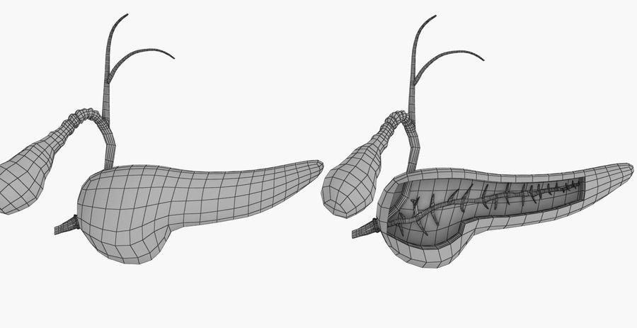 Alvleesklier dwarsdoorsnede anatomie royalty-free 3d model - Preview no. 15