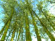 Bamboo Forest-animatiepakket 10 3d model