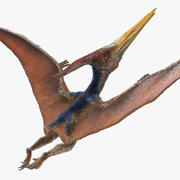 Pteranodon uçan kürk ile poz 3d model