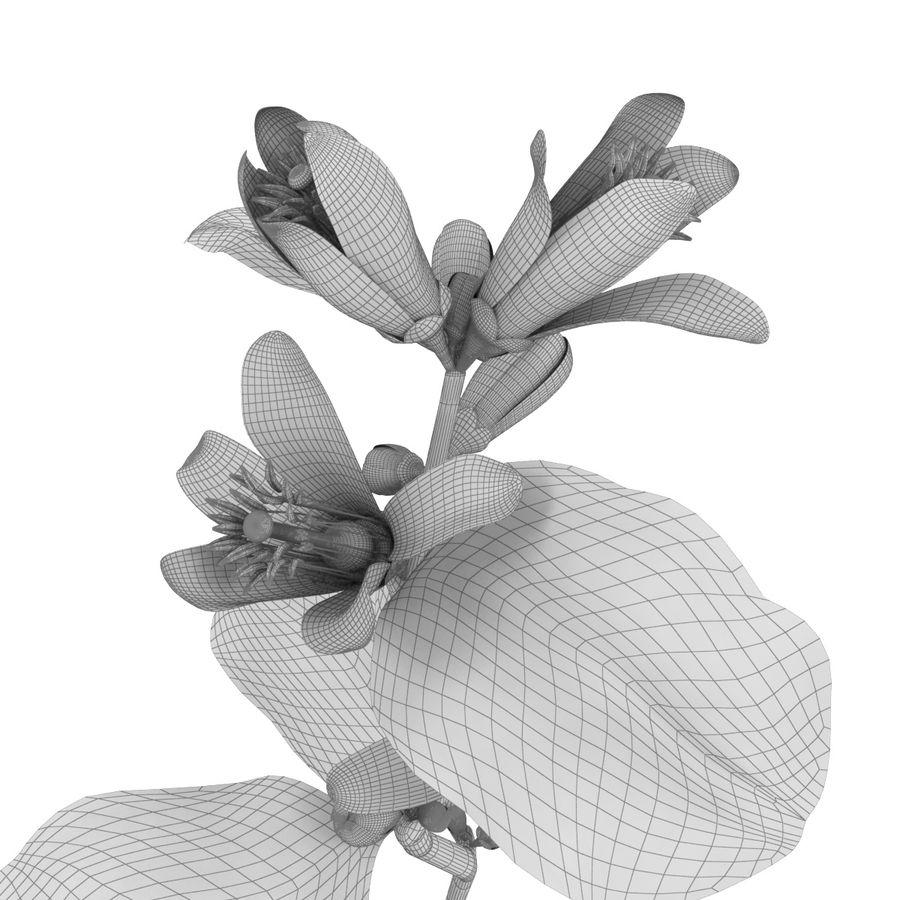 Citrus orange flower royalty-free 3d model - Preview no. 8