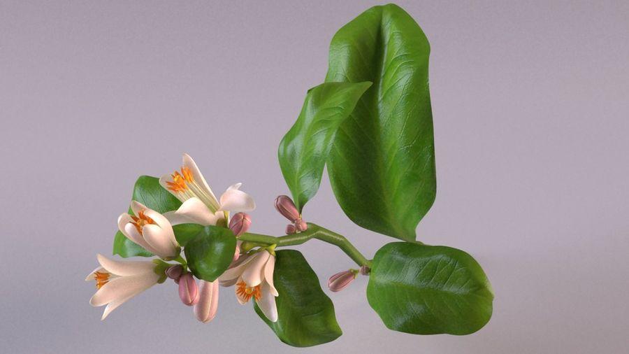 Citrus orange flower royalty-free 3d model - Preview no. 1