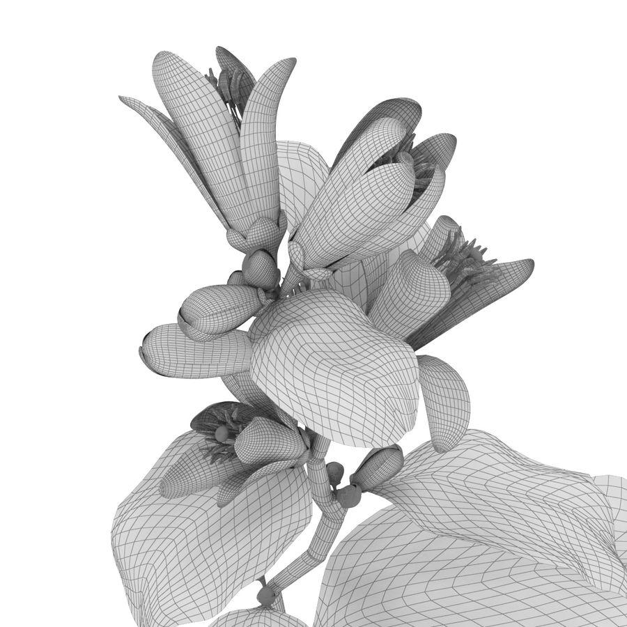 Citrus orange flower royalty-free 3d model - Preview no. 7