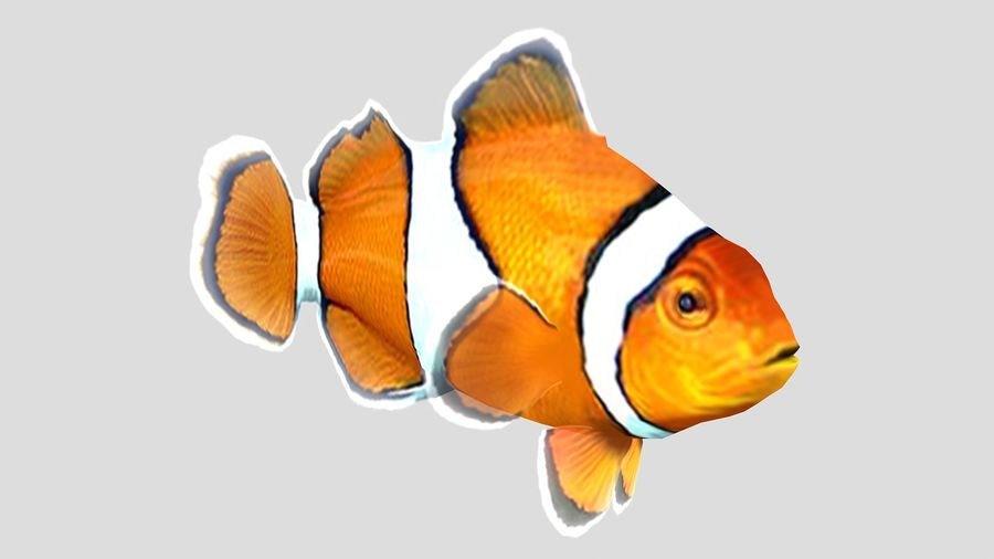 Clownfish Tropical Fish royalty-free 3d model - Preview no. 2