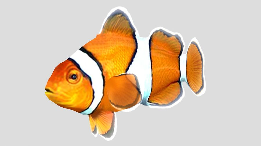 Clownfish Tropical Fish royalty-free 3d model - Preview no. 1