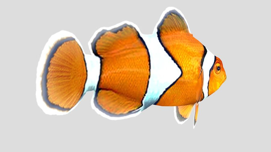 Clownfish Tropical Fish royalty-free 3d model - Preview no. 4