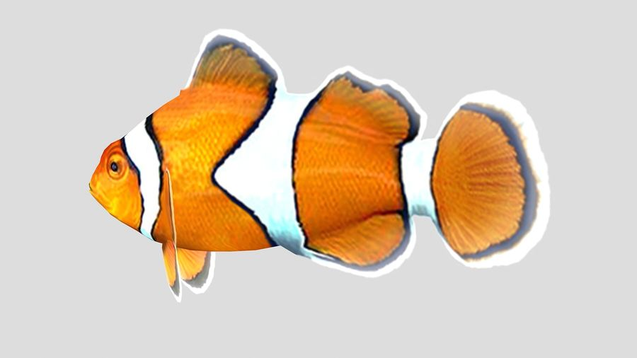 Clownfish Tropical Fish royalty-free 3d model - Preview no. 5