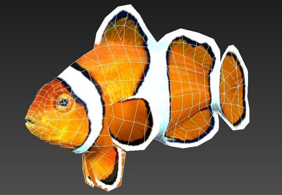 Clownfish Tropical Fish royalty-free 3d model - Preview no. 6