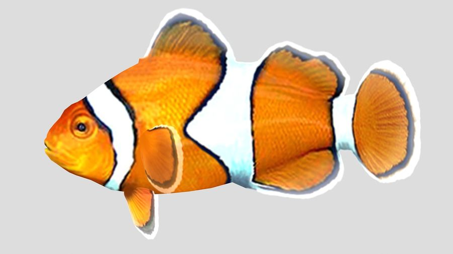 Clownfish Tropical Fish royalty-free 3d model - Preview no. 3