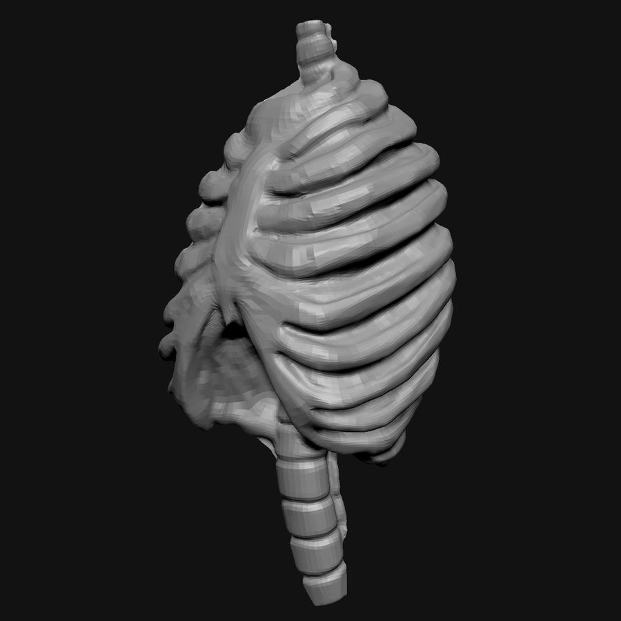 Stylised Bones royalty-free 3d model - Preview no. 8