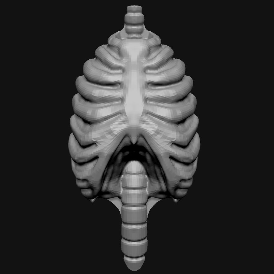 Stylised Bones royalty-free 3d model - Preview no. 7