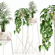 植物收藏140玉 3d model