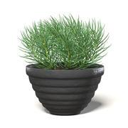 Plant in Black Pot 3D Model 3d model