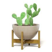 Cactus 3D Model in Brown Pot 3d model