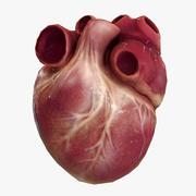 본사 인간의 심장 애니메이션 3d model