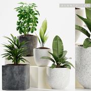 Les plantes 3d model