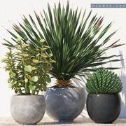 Plantes du désert 3d model