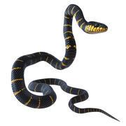Animated Mangrove Snake 3d model