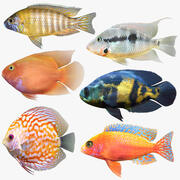 Cichlids Fish Collection 3d model